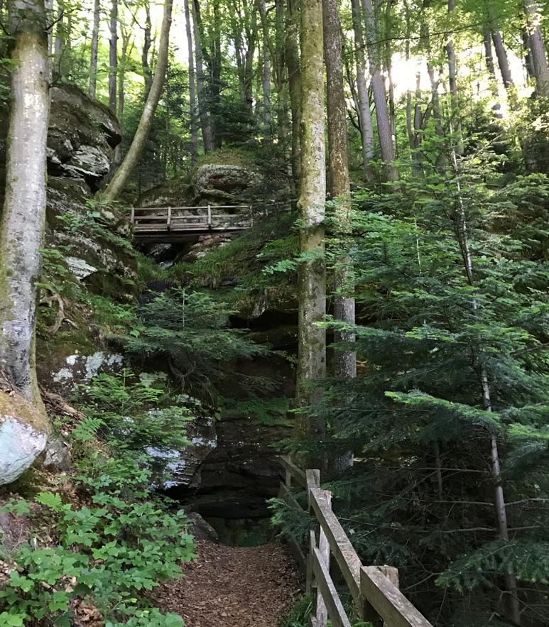 Premiumwanderweg im Pfälzerwald Teufelspfad