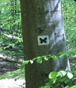 Schmetterlingspfad in Kirkel Wandern im Saarland