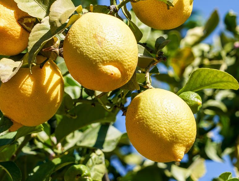 Hautpflege Vitamin C