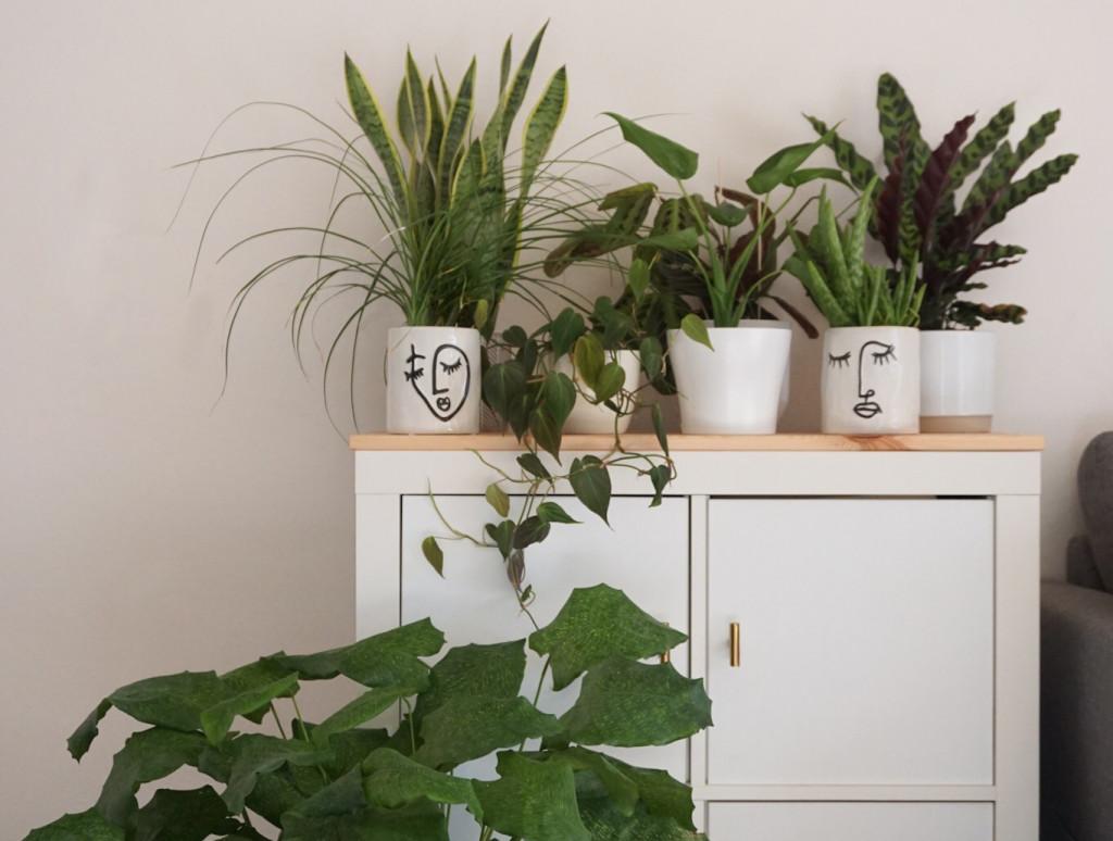 ungiftige Zimmerpflanzen für dein Zuhause
