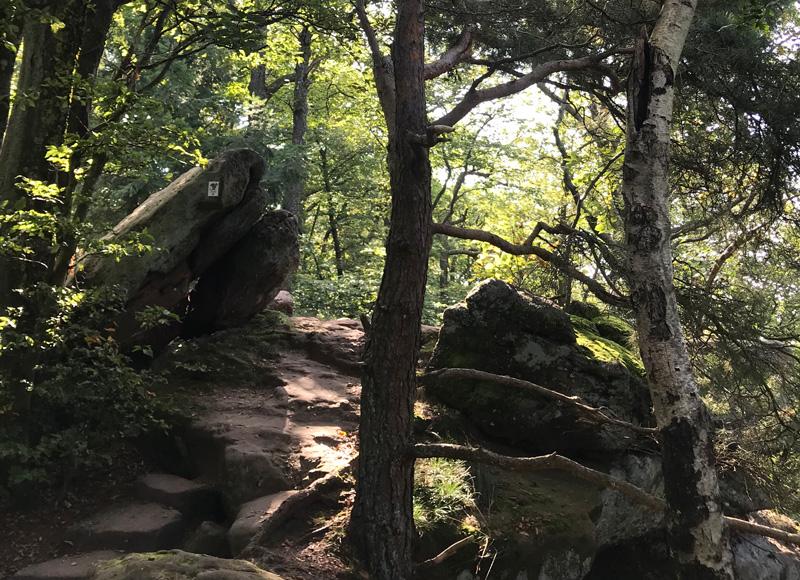 Wanderweg Westfels zu Südfels Drachenfelswanderung im Pfälzerwald